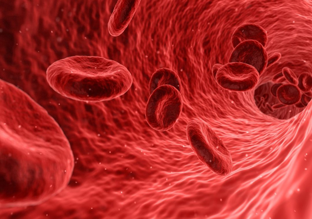 how hemoglobin is produced in body, know about process and importance of its formation.